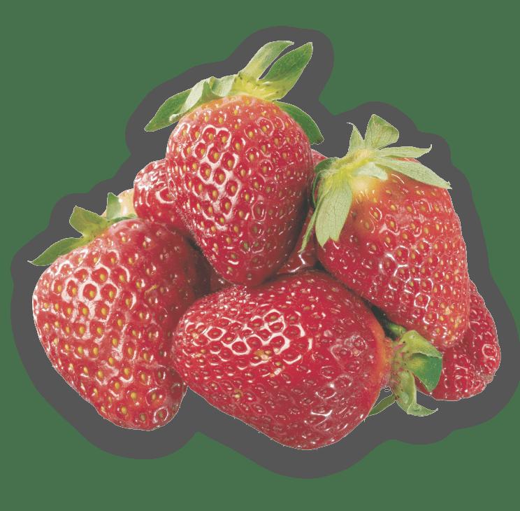 visuel fraise-02 - Copie